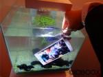 Sony Xperia Z3 étanchéité