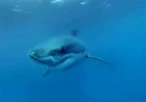 Réalité virtuelle vidéo plongée avec requins
