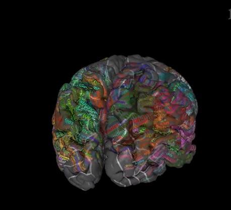 dictionnaire cerveau 3d