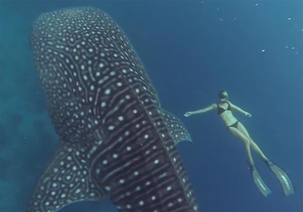GoPro requin baleine