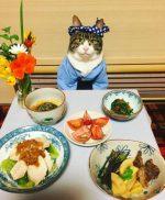 Japon - Un chat adepte du cosplay