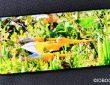 OnePlus 7 Pro test de la photo