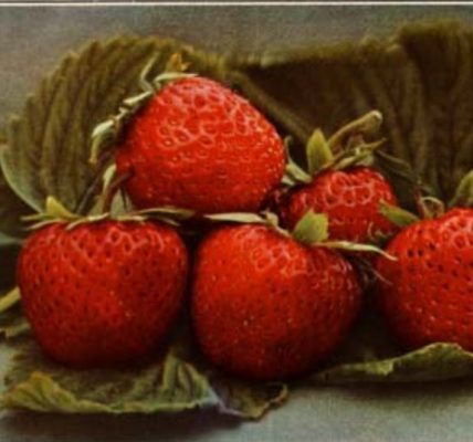 pomologie fruits aquarelle à télécharger