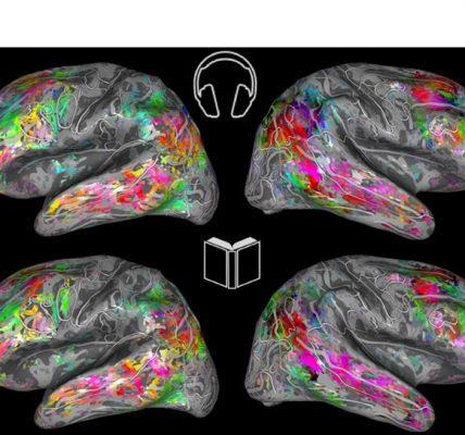cerveau livre audio