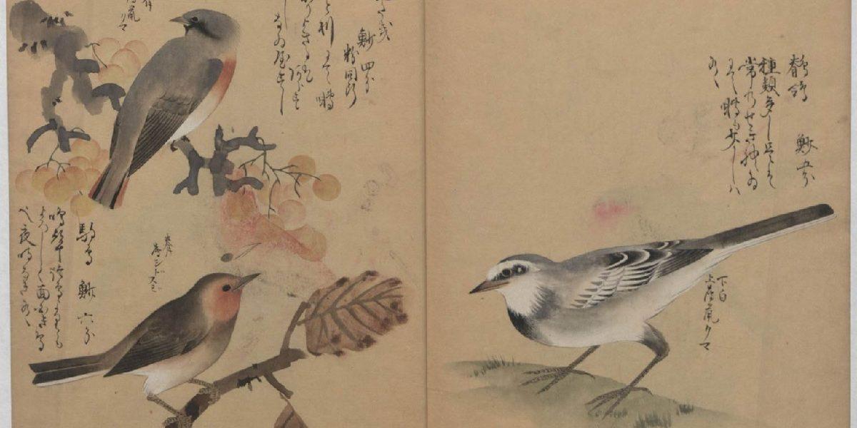 livres japonais gratuits