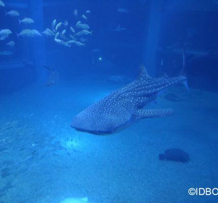 Coronavirus voir les aquarium en stremaning