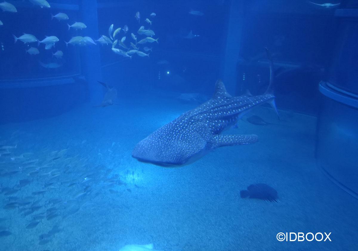 Coronavirus voir les aquarium en streaming