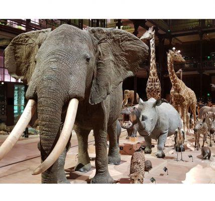 Musee-Histoire-naturelle-generique-01 ressources confinement