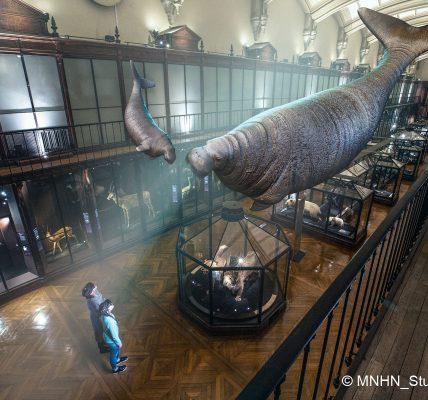 Expo Revivre Musée National d'Histoire Naturelle