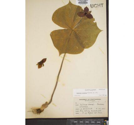 herbier-numerique-3-millions-de-specimens-gratuit